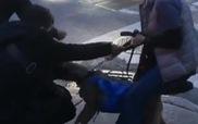 Chó Pitt Bull hung dữ tấn công mèo trên đường đi dạo cùng chủ