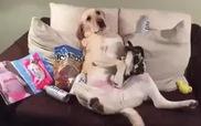Phản ứng hài hước của cún khi biết vợ đi làm về...