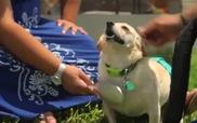 Chú cún bị liệt 2 chân truyền nghị lực cuộc sống cho cậu chủ