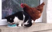 Mèo: Đừng hòng giành thức ăn của bà nhé!
