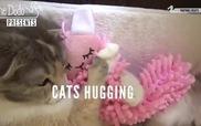 Chú mèo có sở thích ôm gấu bông khi ngủ