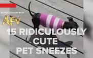 """Những chú cún này nhảy mũi kiểu """"không đụng hàng""""..."""