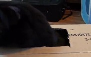 Với những chiếc hộp, mèo có thể đốt thời gian cả ngày...
