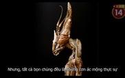 Sự thật hết hồn: Bọ ngựa cứng cựa