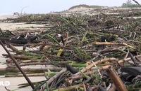 Ghi nhanh: Bãi biển Quảng Bình ngập rác, bốc mùi sau lũ