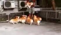 """Nghĩ bạn bị bắt đi, đàn cún chạy theo quyết """"đòi lại công bằng"""""""