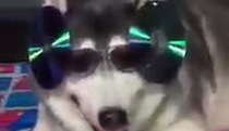 """Cún cũng đua đòi theo trào lưu """"siêu nhân điện quang"""""""