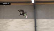 Cảnh sát Hà Lan sử dụng đại bàng để săn... Drone