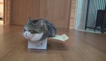 Mèo Maru vs hộp Cac-tông tí hon