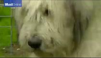 5 năm sau cái chết của chủ nhân, chú chó vẫn ngồi im đợi chủ quay về...