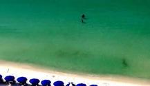 Đi biển, hai người suýt bị cá mập đầu búa tấn công