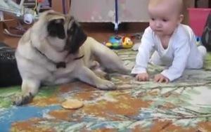 Bé và cún Pug chia sẻ bánh quy cho nhau