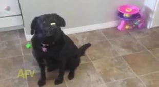 Bé yêu hồn nhiên tranh đồ ăn của cún