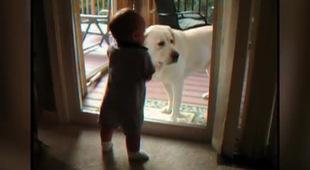 Những tình huống thật đáng yêu giữa bé và cún