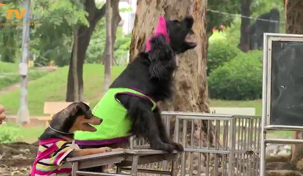 """""""Cháu ơi, cháu à"""": Hai bà cháu Hương Dung vất vả với những chú chó."""