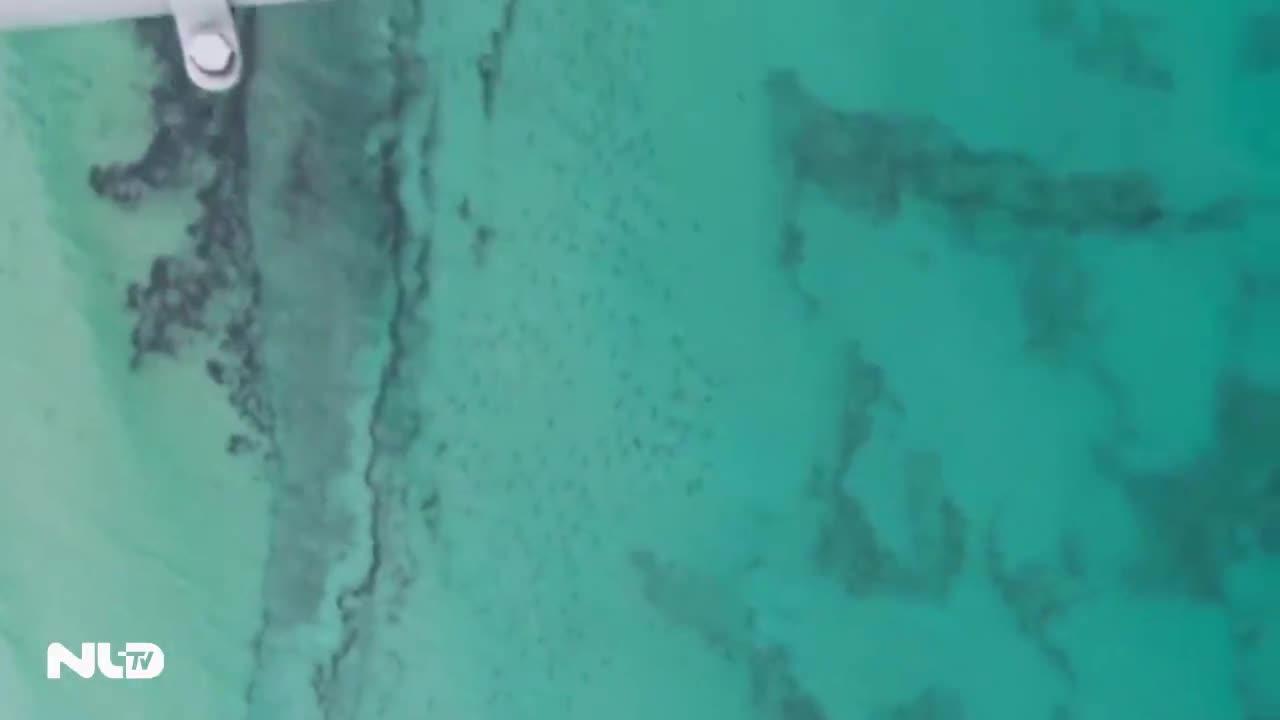 Video hàng vạn cá mập di cư dọc bờ biển Florida