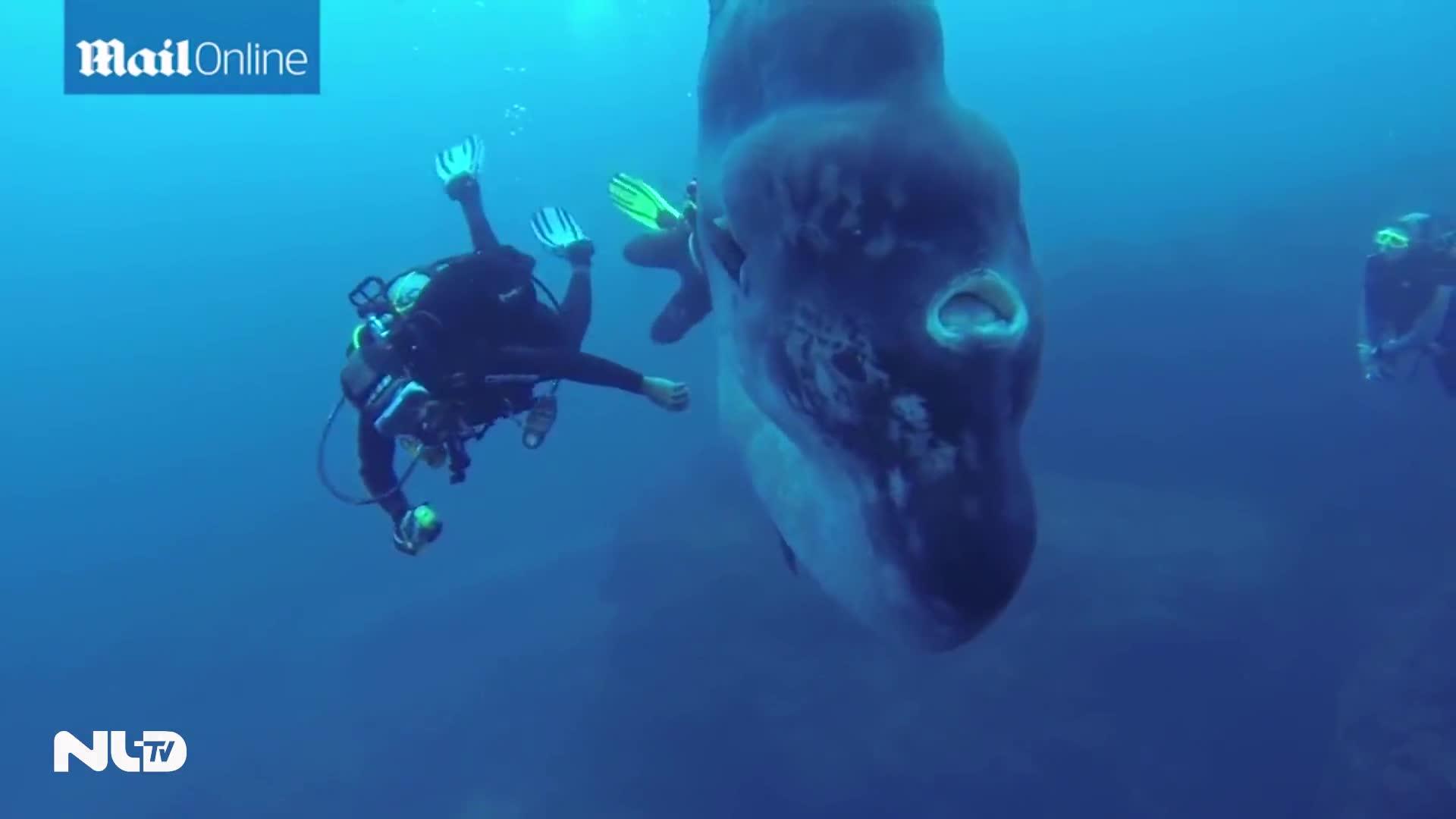 Ngắm cá khổng lồ ngoài khơi bờ biển Bồ Đào Nha