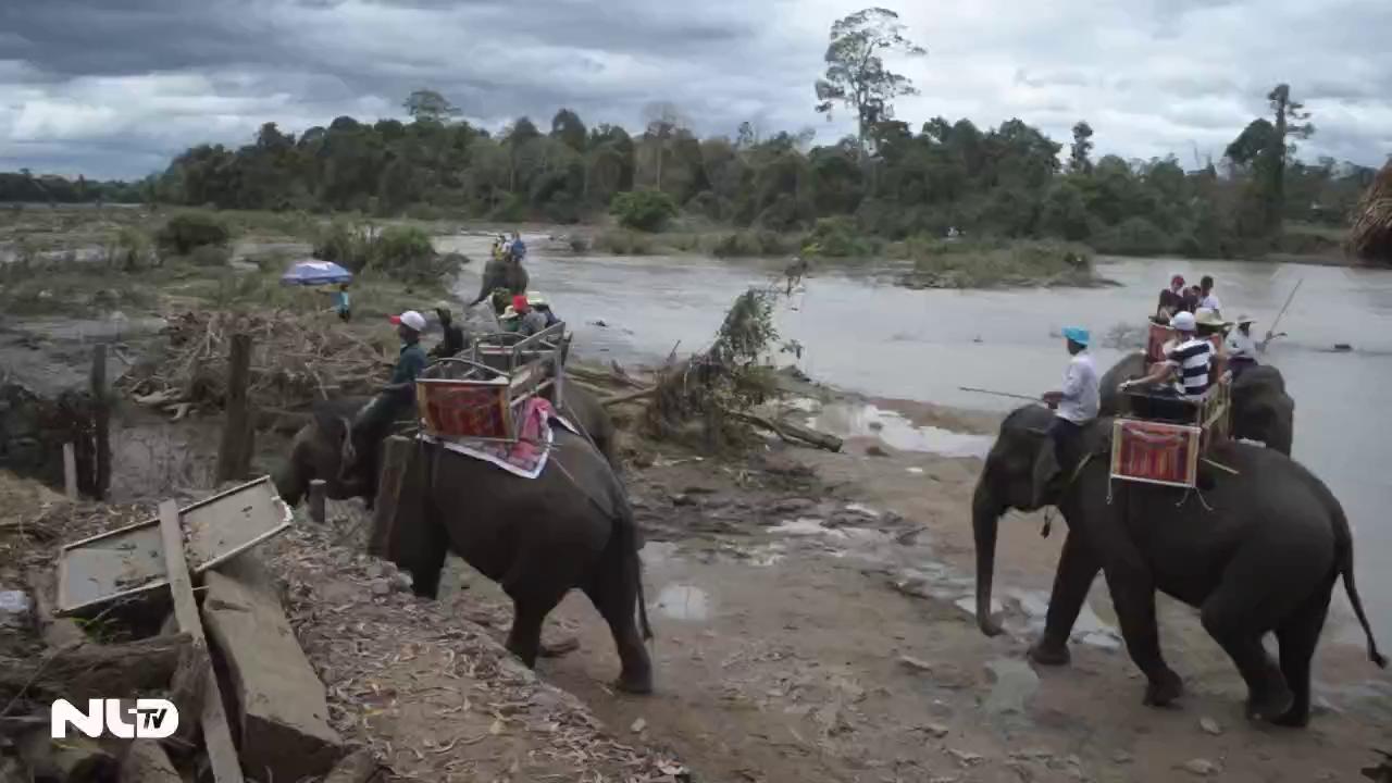 Vắt kiệt sức voi phục vụ du khách dịp Tết