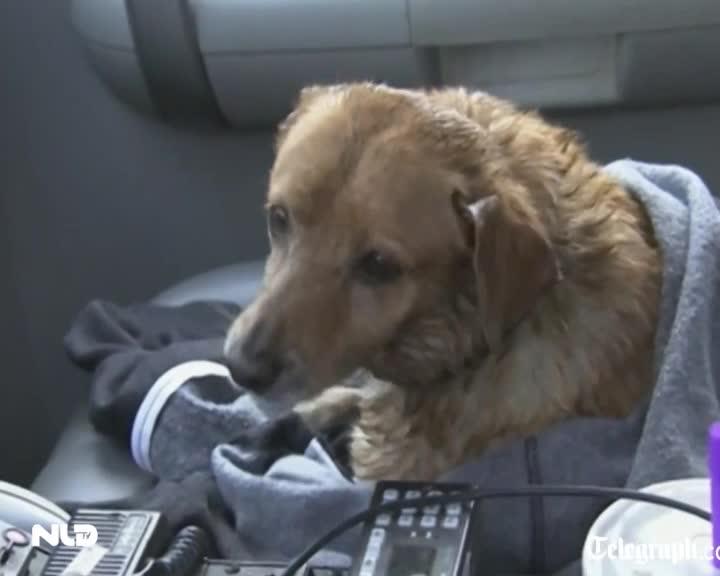 Trực thăng cứu chú chó giữa dòng nước lũ