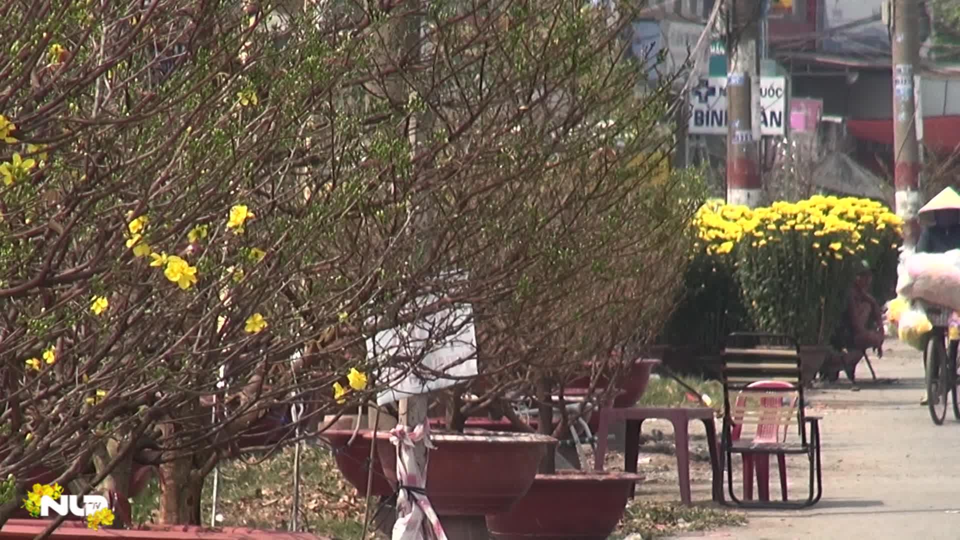 Phóng sự: TP HCM: Hoa tết đổ bộ xuống phố