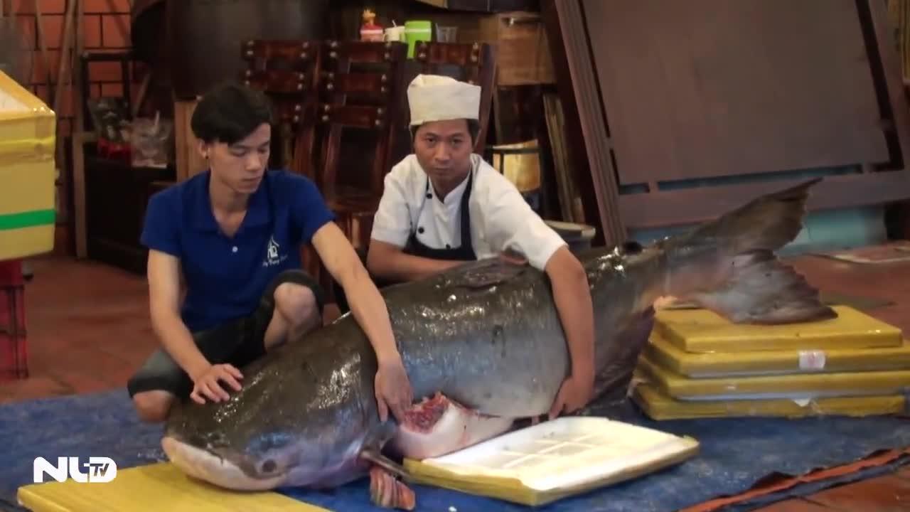 Ngư dân lại bắt được 2 loại cá quý hiếm