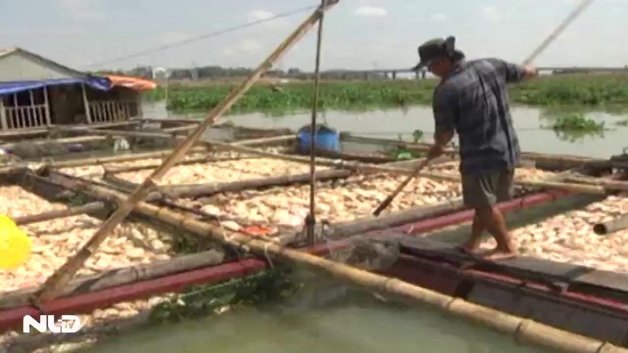 La Ngà, Đồng Nai: Người dân không còn sức để vớt cá chết
