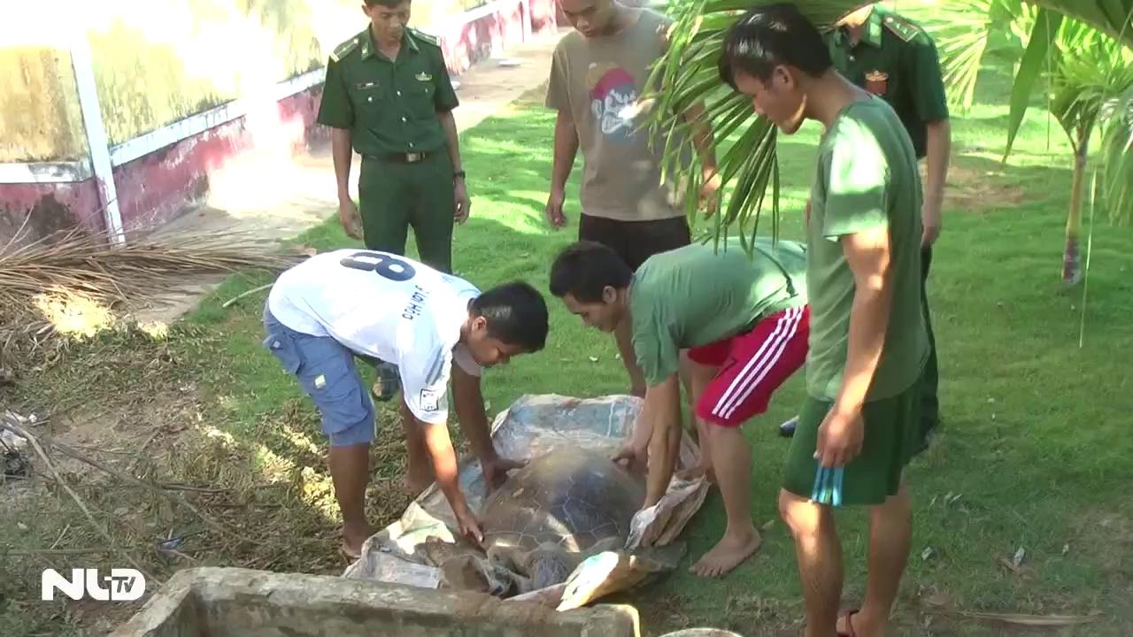 Rùa biển quý hiếm 40 kg suýt bị xẻ thịt
