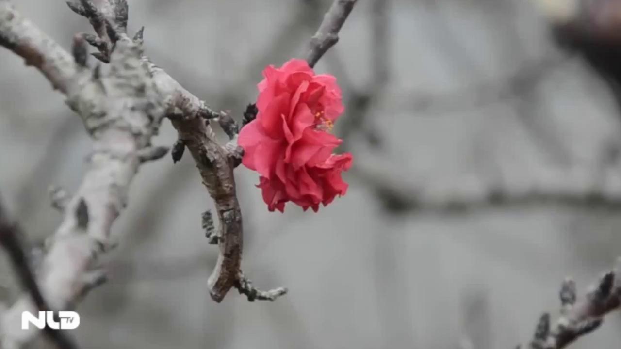 """Vẻ đẹp """"Vương giả"""" của Đào Thất Thốn"""