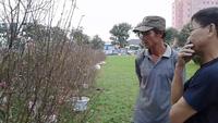 Vượt ngàn cây số, đào Nhật Tân hút khách đất võ Bình Định