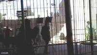 Kinh hãi khoảnh khắc sư tử tấn công diễn viên xiếc trong khi đang biểu diễn