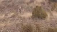 Sinh vật giống người bí ẩn đi giữa sa mạc vắng