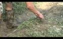 Nông dân Nghệ An khôi phục sản xuất sau mưa lụt
