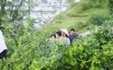 Người dân đổ xô đi xem cây cổ thụ bị sét đánh