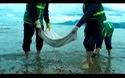 Bùn đen, xà bận xuất hiện trên bãi biển Quy Nhơn