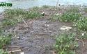 Video: Cá lồng chết hàng loạt khiến người dân lao đao