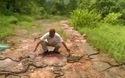 Rợn người khoảnh khắc hàng trăm con rắn được thả vào rừng