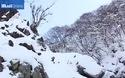 Khỉ tuyết Nhật Bản tắm suối nước nóng