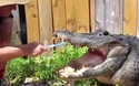 Người đàn ông gây sốc vì đánh răng cho cá sấu