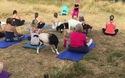 Sốt xình xịch lớp học yoga dê