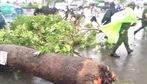 Mưa lớn kèm giông lốc, hàng loạt cây ngã đổ đè người đi đường ở Sài Gòn