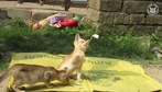 Ngắm mèo lười cho thư giãn đầu óc nào