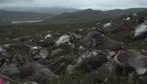 Lý do hàng trăm tuần lộc ở Na Uy bị sét đánh chết đồng loạt