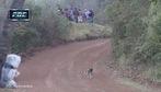 Chú chó thoát chết thần kỳ trên đường đua off-road