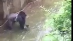 Khỉ đột kéo lê, quăng quật cậu bé 4 tuổi