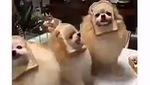 Cùng thư giãn với những chú chó đọc rap