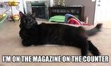 """10 ví dụ khó đỡ về """"Logic"""" của loài mèo"""