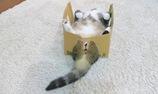Cuộc sống chỉ toàn nghịch hộp cac-tông của mèo maru