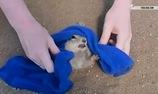 Đôi lúc, động vật cũng cần giúp đỡ đấy nhé!