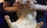 Chú mèo này đang rất thoải mái nhé!