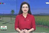 Bản tin thời tiết nông vụ - 30/9/2016